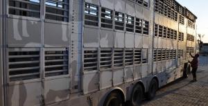 Irak'a Canlı Hayvan Taşımacılığı Yapan Firmaların Dikkatine!