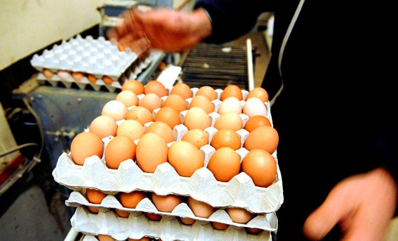 İran Üzerinden Gerçekleştirilen Transit Yumurta Taşımacılığı